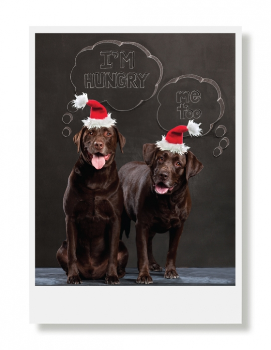 Sadie and ranger holiday greeting card hooray for the underdog sadie and ranger holiday greeting card m4hsunfo